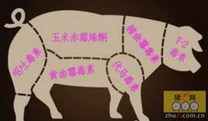 养猪人如何选择霉菌毒素吸附剂