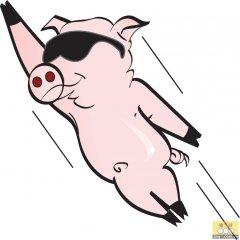 """如何正确认识""""火箭猪""""与""""它的回落""""说法?"""