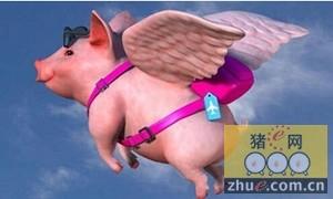 """聚焦十三五:站在""""互联网+""""风口 猪也能飞?"""