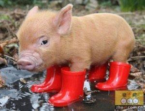 年末猪价怎么走?这些数据告诉你