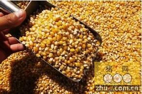 日本今年玉米进口量或降至近30年低点