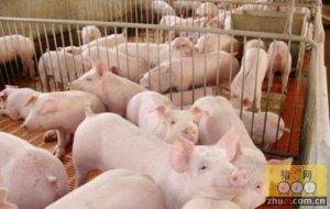 猪价维稳增多,目前仍处转折时期