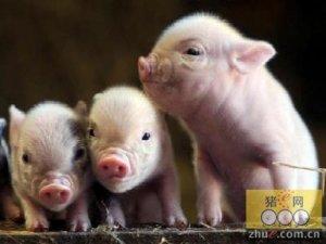 居民举报猪场臭,正规养殖也遭查