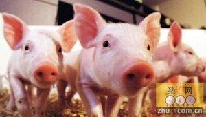 中国是世界上最大的猪肉生产国和消费国