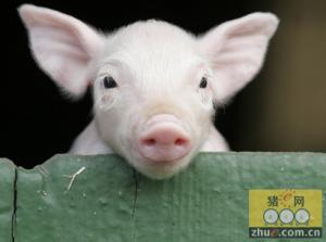 四季度猪价上涨的天花板在8月份已现