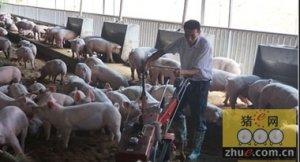 养猪场恶臭的三大控制措施