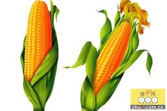 """华北玉米成为市场走势""""风向标"""""""