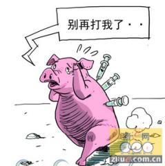 解读欧洲报告,总结猪群中母仔的免疫目标。