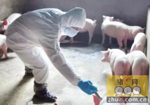 生猪价格筑底回升 猪病有所抬头 养殖户需谨慎预防