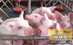 2016年生猪全年平均养