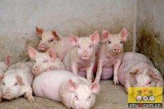 台湾养猪业的发展有哪些值得我们借鉴的地方?