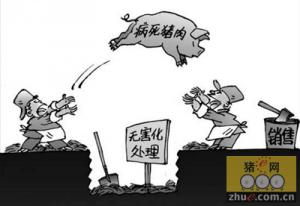 广东茶山查获2120公斤病死猪肉