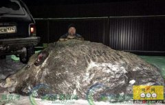 俄罗斯猎人打死超半吨重巨型野猪