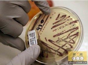 中国并非唯一发现新型耐药基因MCR-1的国家