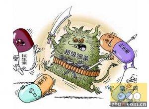 """兽吃人药易产生""""超级细菌"""""""