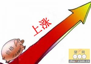 12月中下旬猪价可能会迎来上涨的小高峰期