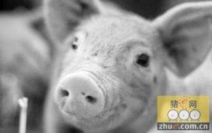 气温骤变防治结合严控猪流感