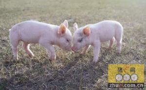 农业部:珠三角养猪已超负荷 要减