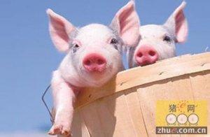 日本提高对养猪农民的支持