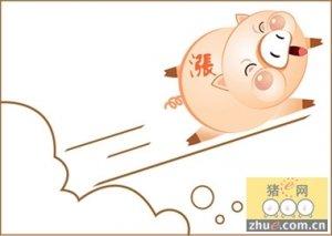 冬至高峰消费 带动猪价上涨