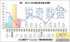 锐奇数据15年11月猪评:12月猪价将缓慢上升