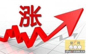 市场:猪价再涨,传言玉米运费补贴200元/吨,猪价能否到9?