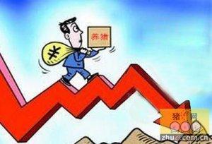 东北、华北猪价呈现明显下调态势