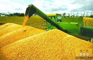 农业调整思路:重点减少玉米种植面积