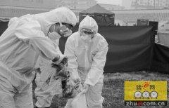 病死动物无害化处理的难处及对策