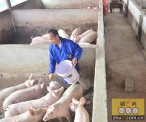 冯迪青:从赊猪到投资百万养猪