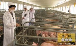 彻底消毒猪舍可降低患病风险
