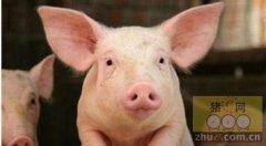新疫苗临床试验动物数量调整,猪5000头起步