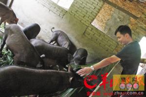 珠三角生猪养殖过量污染大 已超过土地负荷