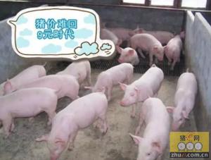 """猪价整体向上的态势不改!恢复""""9元""""时代也不易!"""