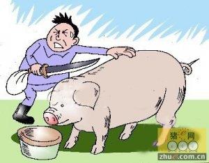 """生猪运输途中""""不行了"""" 猪贩高速上杀猪"""