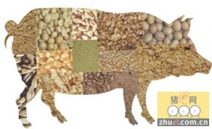 蔡辉益:未来中国饲料行业面临的严峻形势及发展趋势