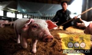 养猪的人越来越少,养猪业现新的格局和机遇
