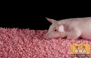 农家母猪舍的冬季保暖方法