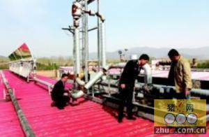 3500头生猪享受太阳能供暖的待遇 出栏周期缩短