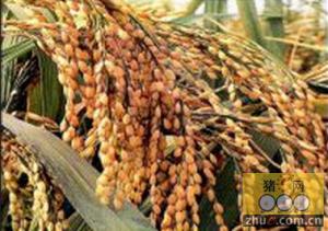 桂林有6家饲料企业获准进境粮食加工资质