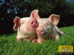 猪场建设:猪舍冬季前后的通风设计