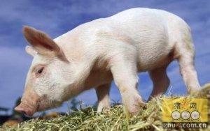 元旦临近 猪肉、生猪价格均呈上涨趋势