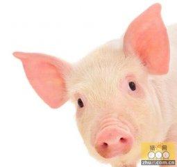 养猪利润高位 需求低于往年均限制猪价涨幅