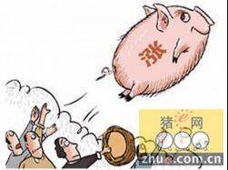 预计猪价达到8.5元后继续上涨阻力依旧较大
