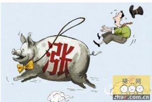 河南前11月经济数据公布 养猪的肯定赚了
