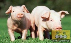 预计2016年生猪价格不会再有大幅度的变化