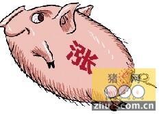 冬至春节期间 猪价总体保持平稳小幅上涨的势头
