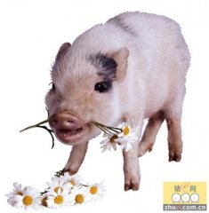 肉价保持上涨态势 猪价跌势难以坐实