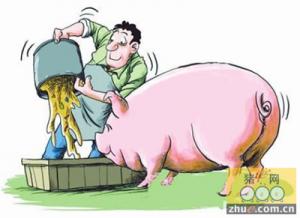 多地维稳猪价有望涨 冬至临近需求不显养户需淡定