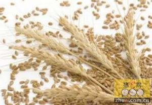 豆粕价格小幅走弱,小麦麸价格持续上涨